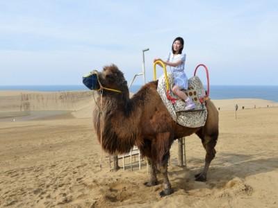 鳥取県といえば鳥取砂丘!鳥取東部自動車学校では、教習がお休みなる日に鳥取砂丘への観光案内をしています。鳥取砂丘ではラクダに乗ることもできます♪