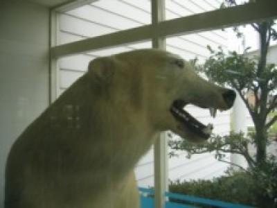 白熊のはく製!