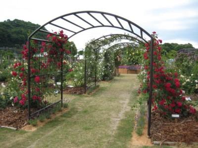 周辺にはバラ園も!バラの香り溢れる庭園へ一歩足を踏み入れれば、アロマ効果で気持ちがリフレッシュします!教習中の気分転換におすすめです♪