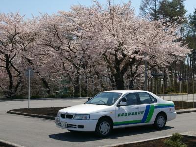 桜もキレイ