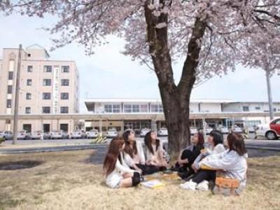 敷地内に桜の木があります